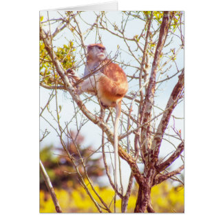 Patasは木の上にあります カード