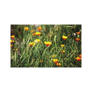 Patterns4Natureの写真撮影の自然の景色d キャンバスプリント
