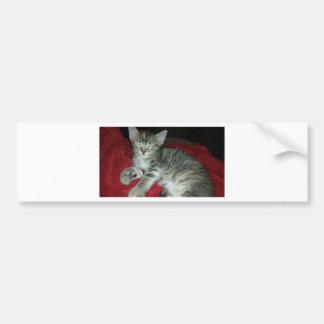 Peapickerの子猫 バンパーステッカー
