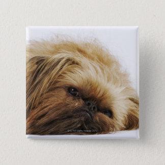 Pekingese犬、終わり 5.1cm 正方形バッジ