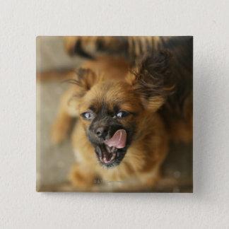 Pekingese 2匹の犬 5.1cm 正方形バッジ
