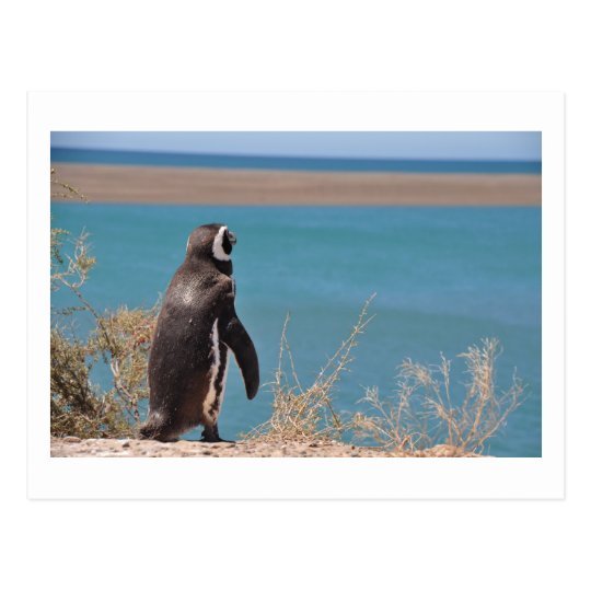 Penguin wants to go ポストカード