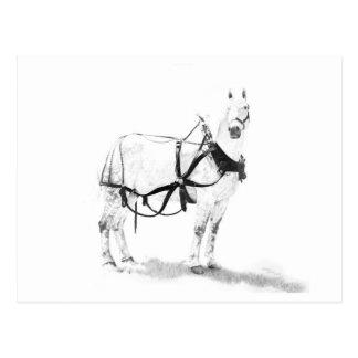 Percheronのばん馬のウマ科のな芸術の郵便はがき ポストカード
