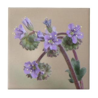 Phaceliaの紫色の野生の花 タイル