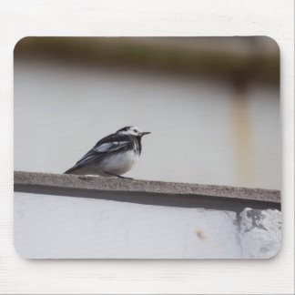 Pied Wagtail マウスパッド