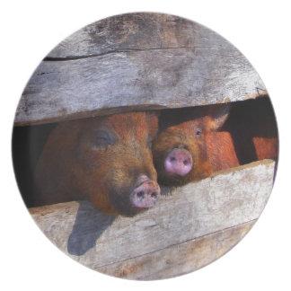 Piggiesをかいま見る豚小屋の組 プレート
