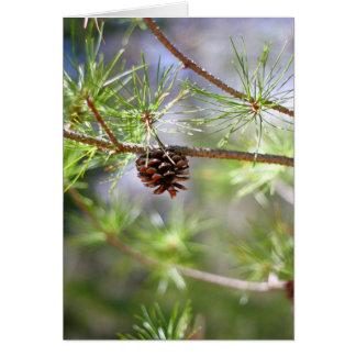 Pinecone -ブランク カード