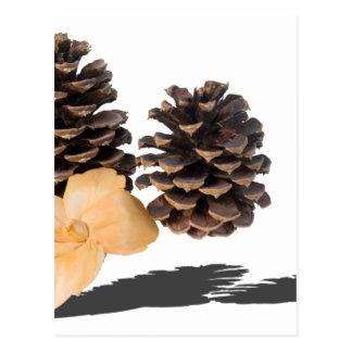 PineconesDriedFlower061315.png ポストカード