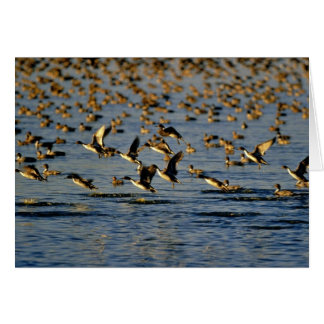 Pintails カード