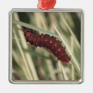 Pipevineのアゲハチョウの蝶幼虫 メタルオーナメント