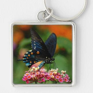 Pipevineのアゲハチョウの蝶 キーホルダー
