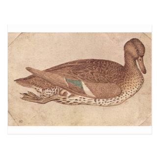 Pisanello著アヒル ポストカード