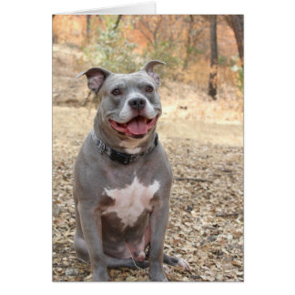 Pitbull Ear-to-Ear Smile Thank You Note Card カード