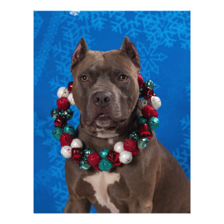 Pittyのクリスマス レターヘッド
