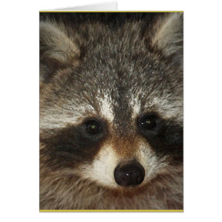 Pixie; one remarkable raccoon full of kindness. カード