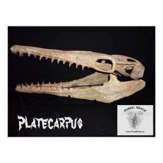 Platecarpus Mosasaurのスカル ポスター