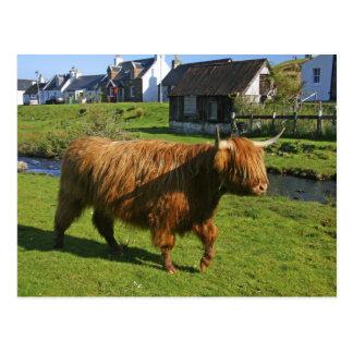 Plockton、スコットランド。 毛深いCoooo (牛)のすること ポストカード