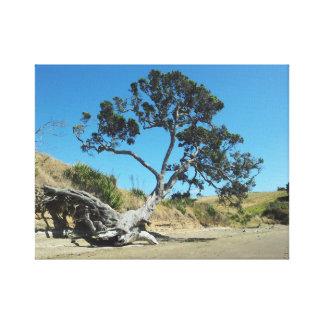 Pohutukawaの古代天然木の長い湾 キャンバスプリント
