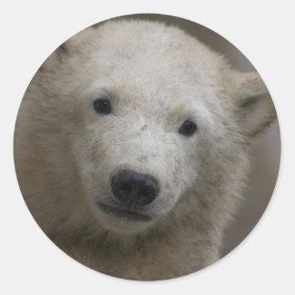 Polarbear ラウンドシール