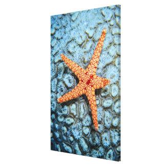 Polipsの珊瑚のヒトデ キャンバスプリント