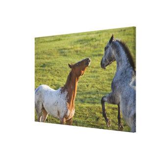 Polson、モンタナの近くの牧草地の馬 キャンバスプリント
