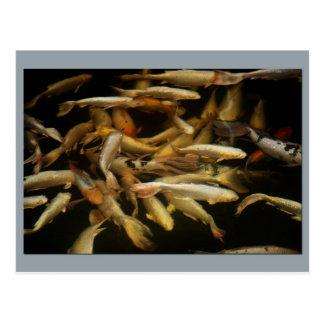 Pondfishのコイの群集 ポストカード