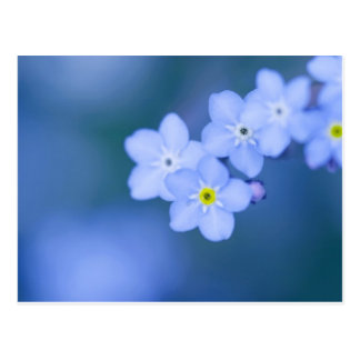 """postcard of """"Forget me not"""" ポストカード"""