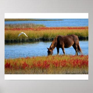 Poster cheval dans les marais ポスター