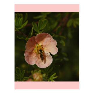 Potentillaの蜂 ポストカード