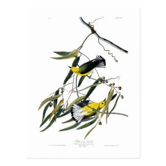 Prothonotaryのアメリカムシクイのジョン・ジェームズ・オーデュボンの鳥 ポストカード