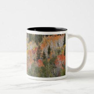 Provoの川および《植物》アスペンの木 ツートーンマグカップ