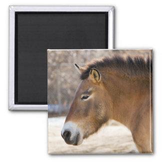 Przewalskiの馬の磁石 マグネット