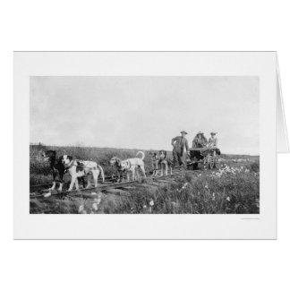 Pupmobileの列車Nome、アラスカ1906年 カード