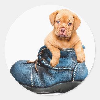 puppy-1154468_640 ラウンドシール