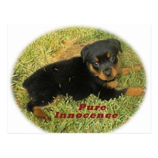 pureinnocenceのロットワイラーの子犬 ポストカード