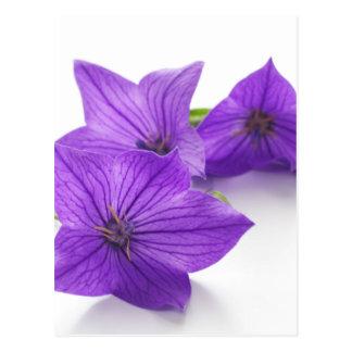 purple bellflower ポストカード