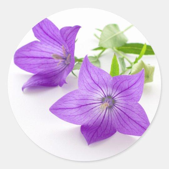 purple bellflowers ラウンドシール