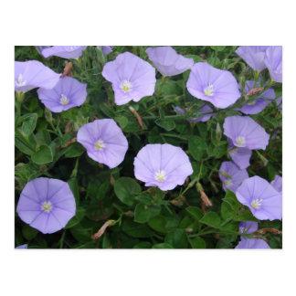 purple flower ポストカード