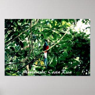 Quetzal、Monteverde、コスタリカ ポスター