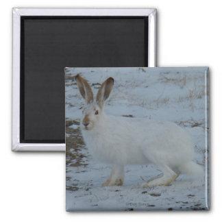 R0023かんじきノウサギ マグネット