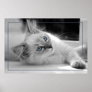 Ragdollの子ネコのキャンバスのプリント ポスター