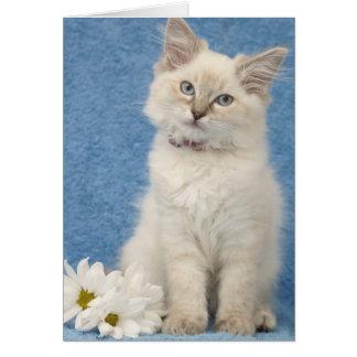ragdollの子ネコのメッセージカード カード