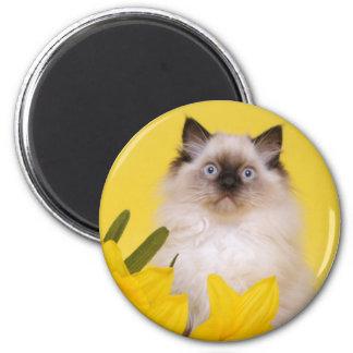 ragdollの子ネコの磁石 マグネット