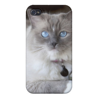 Ragdollメスの猫 iPhone 4/4S Cover