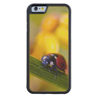 Ragwortの花のてんとう虫 CarvedメープルiPhone 6バンパーケース