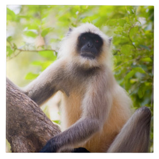 Ranthamboreの国立公園のジャングルの猿 タイル