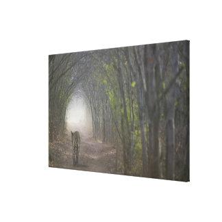 Ranthamboreの森林のベンガルトラ キャンバスプリント