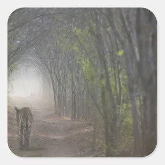 Ranthamboreの森林のベンガルトラ スクエアシール