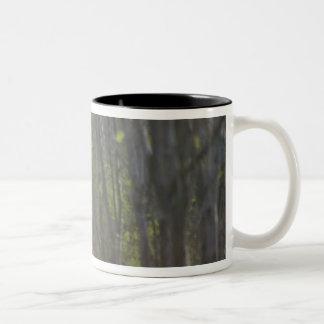 Ranthamboreの森林のベンガルトラ ツートーンマグカップ