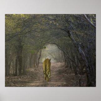 Ranthamboreの森林のベンガルトラ ポスター